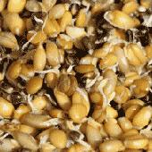 La Gamme graines germées